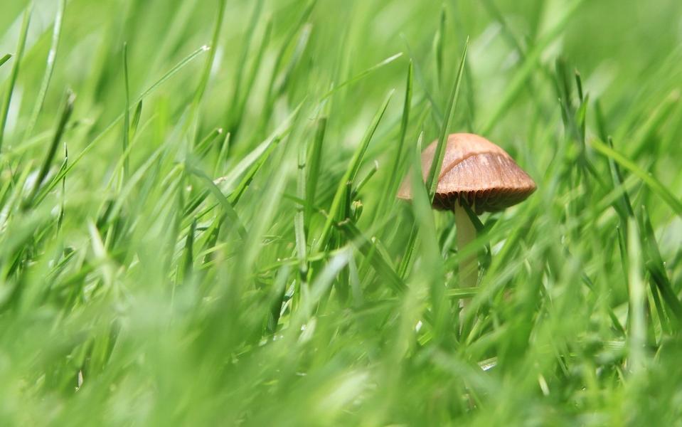 grass and mushroom